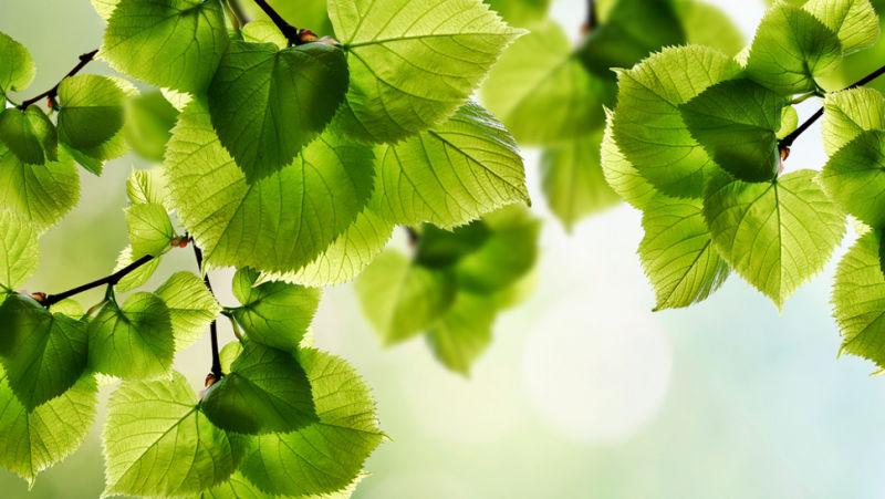 treeleaves_sun